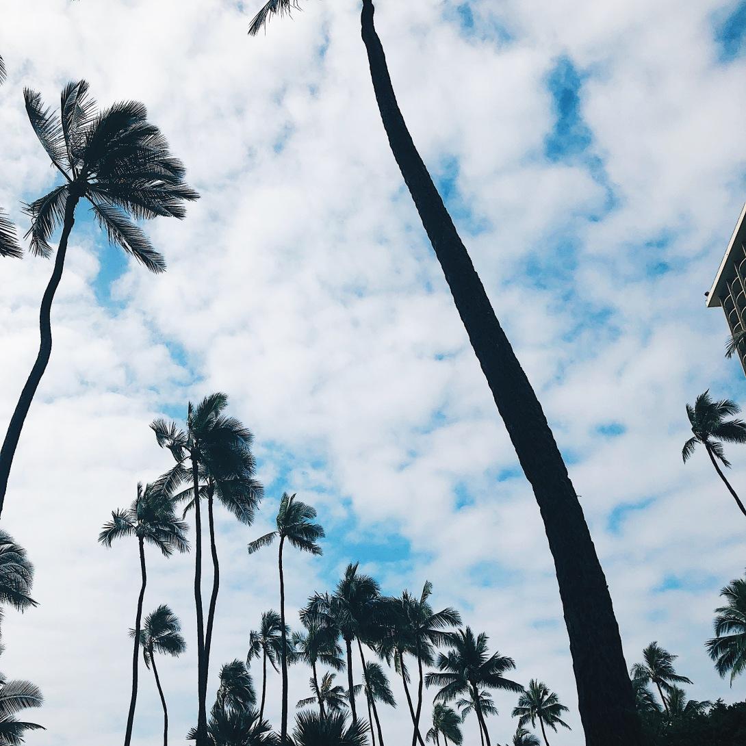Travelguide Oahu Hawaii Palm Trees